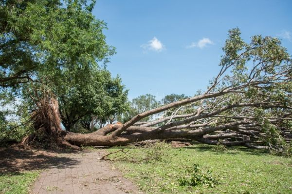 New Smyrna Beach Hazard Tree Removal