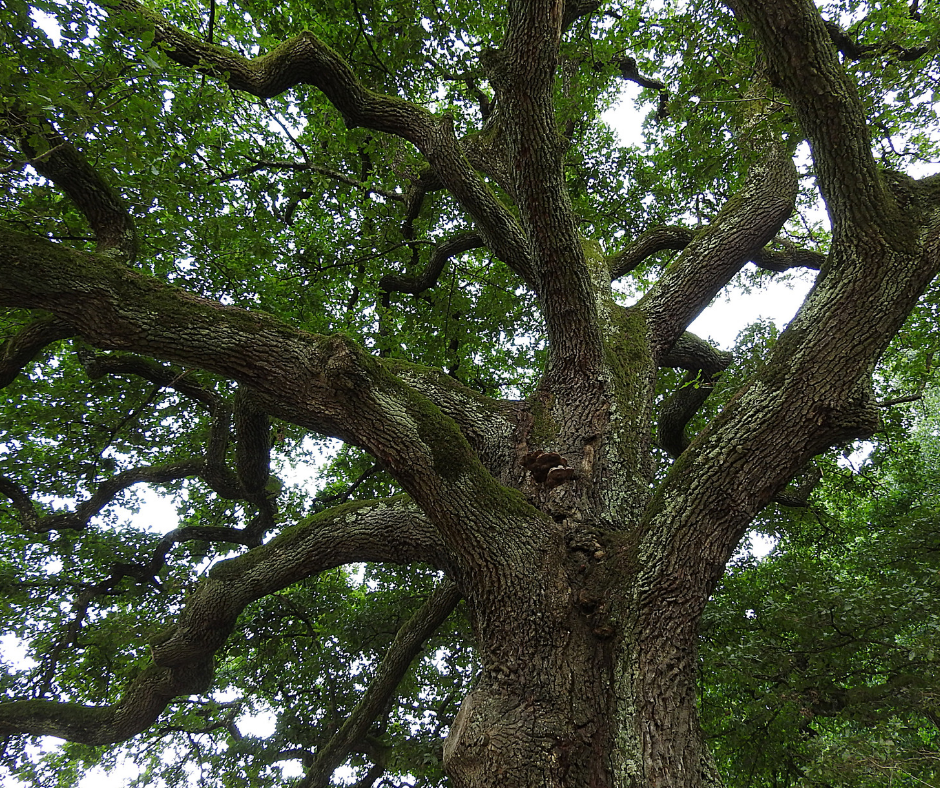 Tree Contractor New Smyrna Beach FL