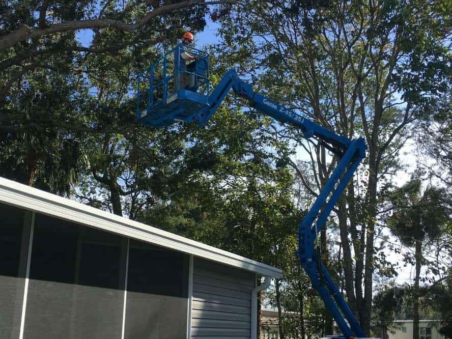 New Smyrna Beach Tree Pruning