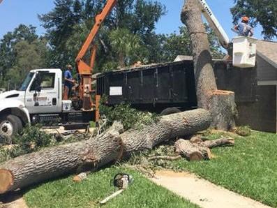 Tree Contractor New Smyrna Beach