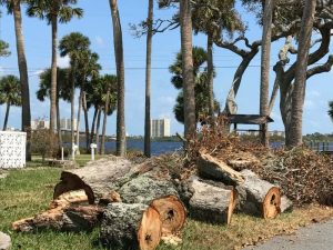 Tree Removal in New Smyrna Beach
