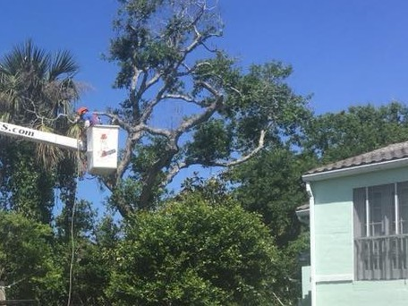 Tree Company New Smyrna Beach