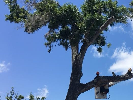 Tree Trimming New Smyrna Beach