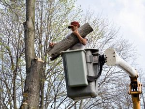 affordable tree removal new smyrna beach
