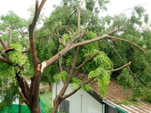 emergency tree removal new smyrna beach