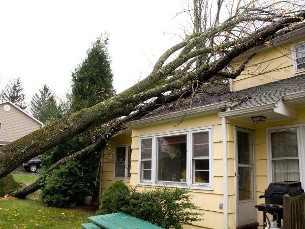 new smyrna beach emergency tree removal