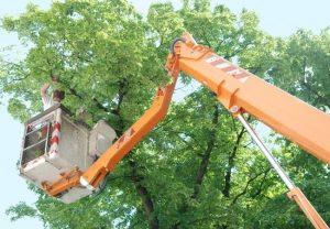 Tree Trimming Service Cost New Smyrna Beach