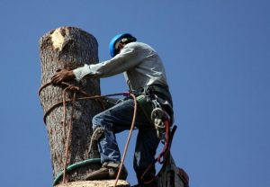 Tree Removal in New Smyrna Beach