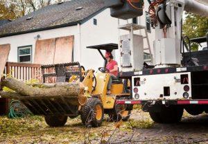 Tree Service Contractor New Smyrna Beach