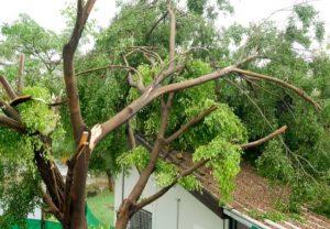 DIY tree removal New Smyrna Beach
