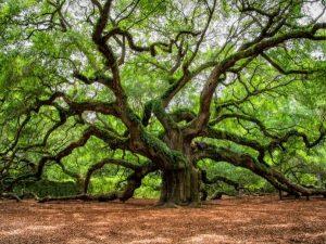 Oak Tree Removal Tips New Smyrna Beach