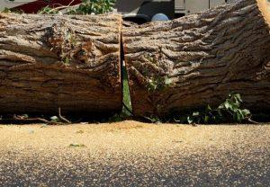 permit for tree removal new smyrna beach