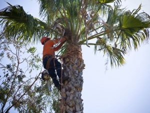 licensed tree contractor new smyrna beach